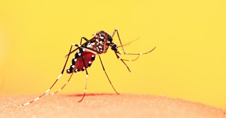 Transmissão da doença se dá somente através do mosquito