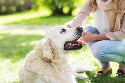 STJ vai definir se é possível regulamentar visitas a animal de estimação