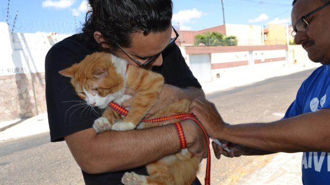 Secretaria de Saúde de Mossoró supera meta de cobertura vacinal contra raiva em cães e gatos
