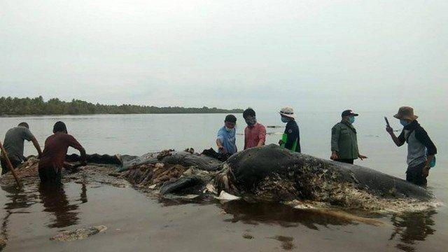 Baleia na Indonésia